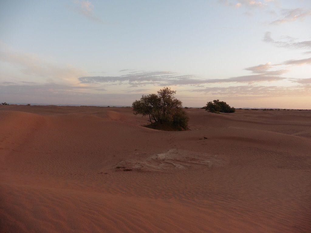 venez fêter le nouvel an 2017 dans le désert marocain