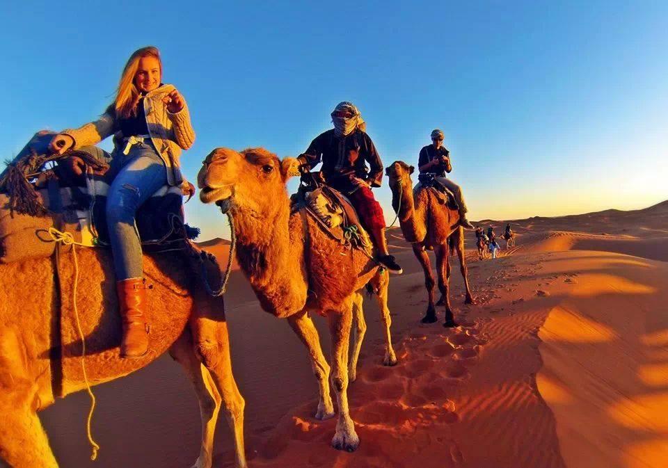 Randonnée chamelière dans le désert
